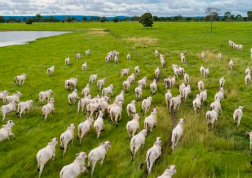 Puxado por pecuária, PIB do agro brasileiro avança